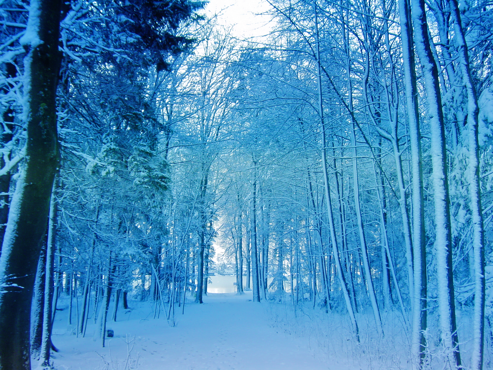 Democratic Forest Snow wallpaper Conservatives Still Did Not Build 1600x1200