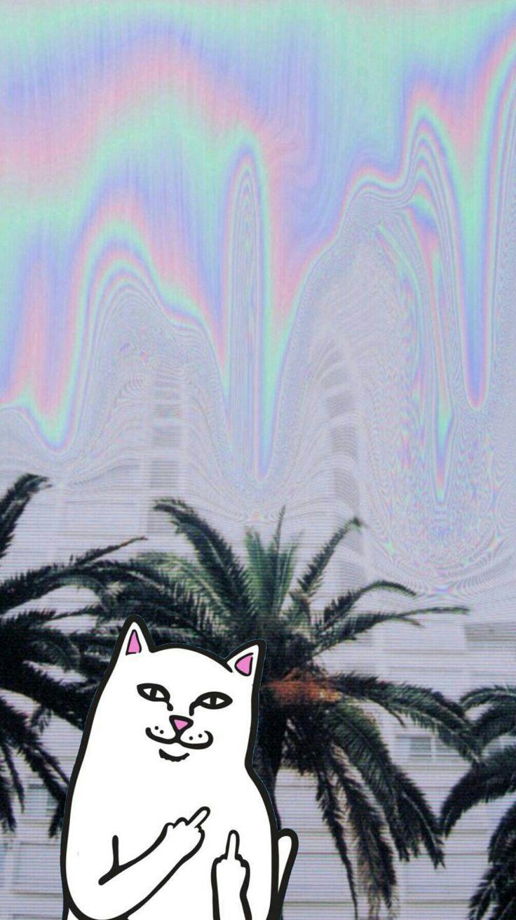 20++ Supreme Cat Iphone Wallpaper - Bizt Wallpaper