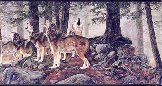 ANIMALS WOLVES Wallpaper Border MRL2405