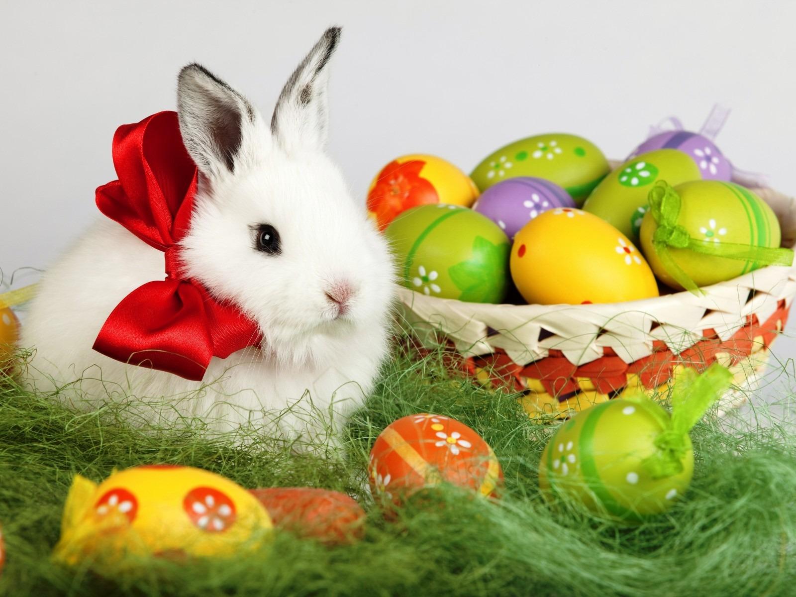 Easter Bunny Desktop Wallpaper 1600x1200