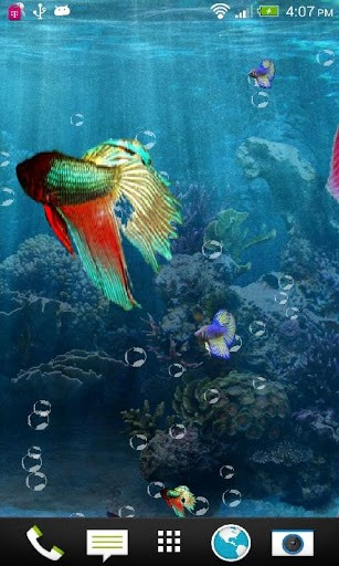 Betta Fish Wallpaper Phone Joy Studio Design Gallery   Best Design 307x512