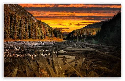 Wooden Logs HD wallpaper for Standard 43 54 Fullscreen UXGA XGA SVGA 510x330