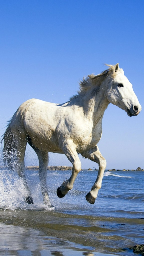 White Horse Running In Water Wallpaper   iPhone Wallpapers 576x1024