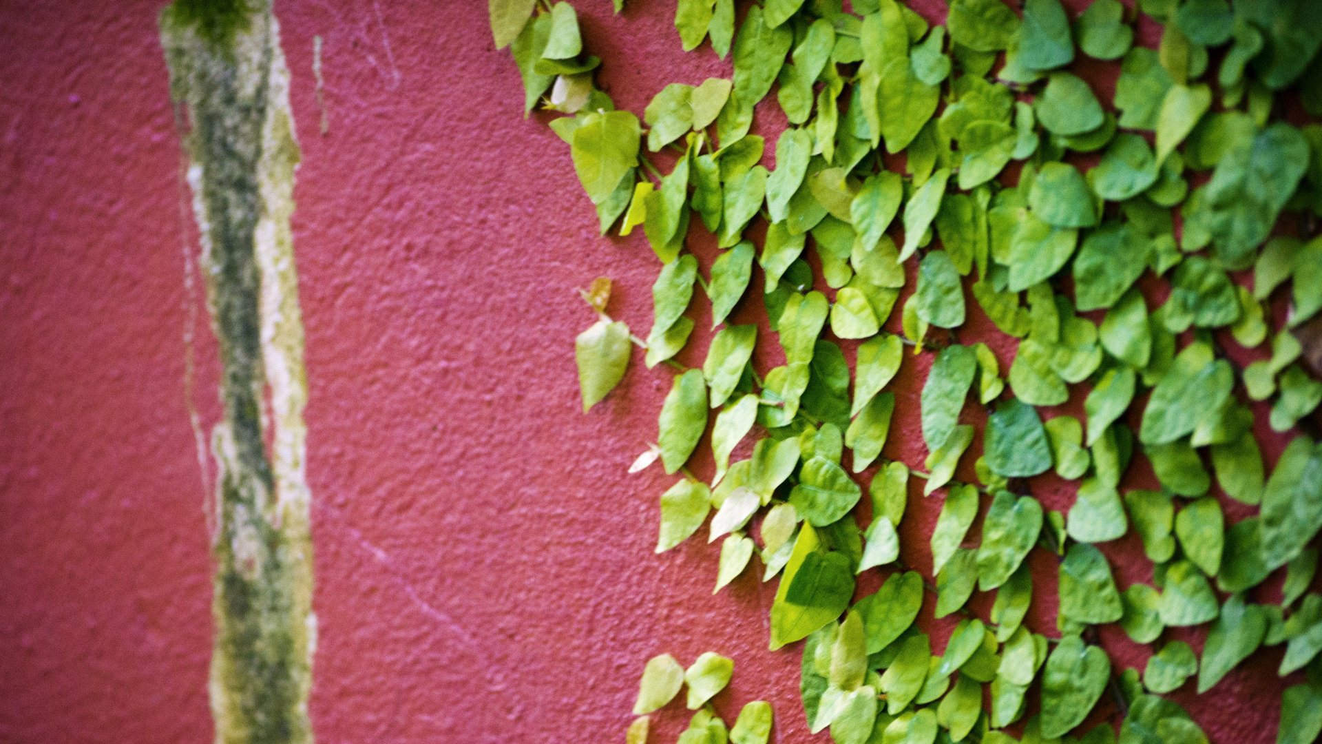 Leaves on Wall HD Wallpapers 1920x1080