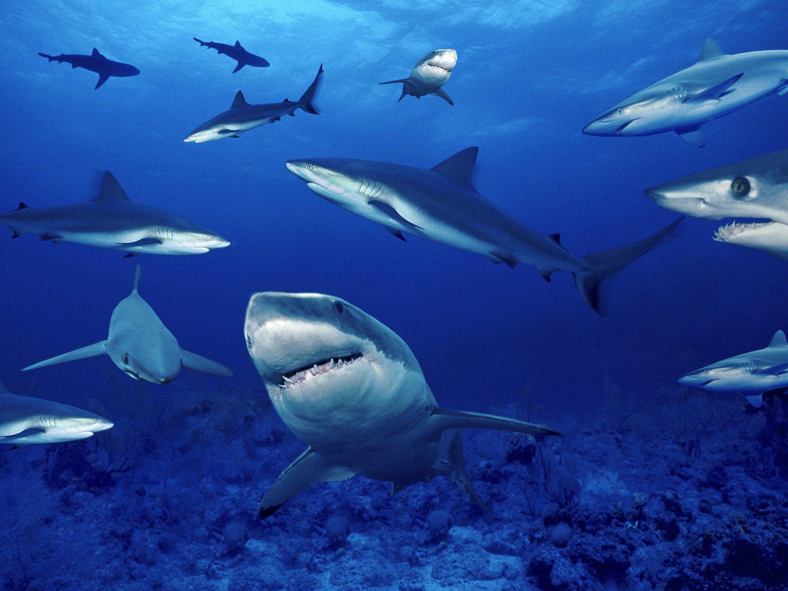 Terrors of the Deep   Ocean Life Photography Desktop Wallpapers 1600x1200