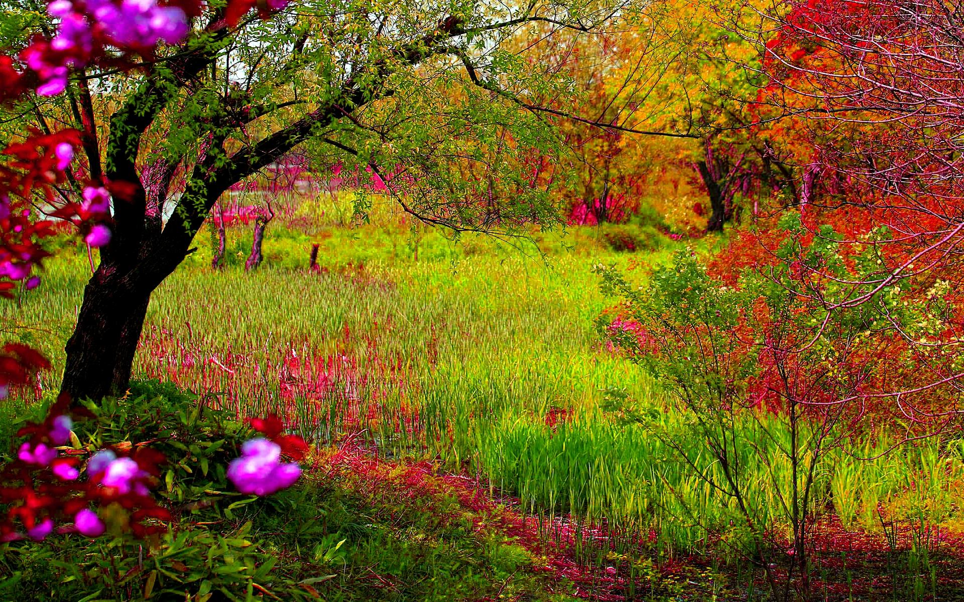 Spring Forest Wallpaper Widescreen