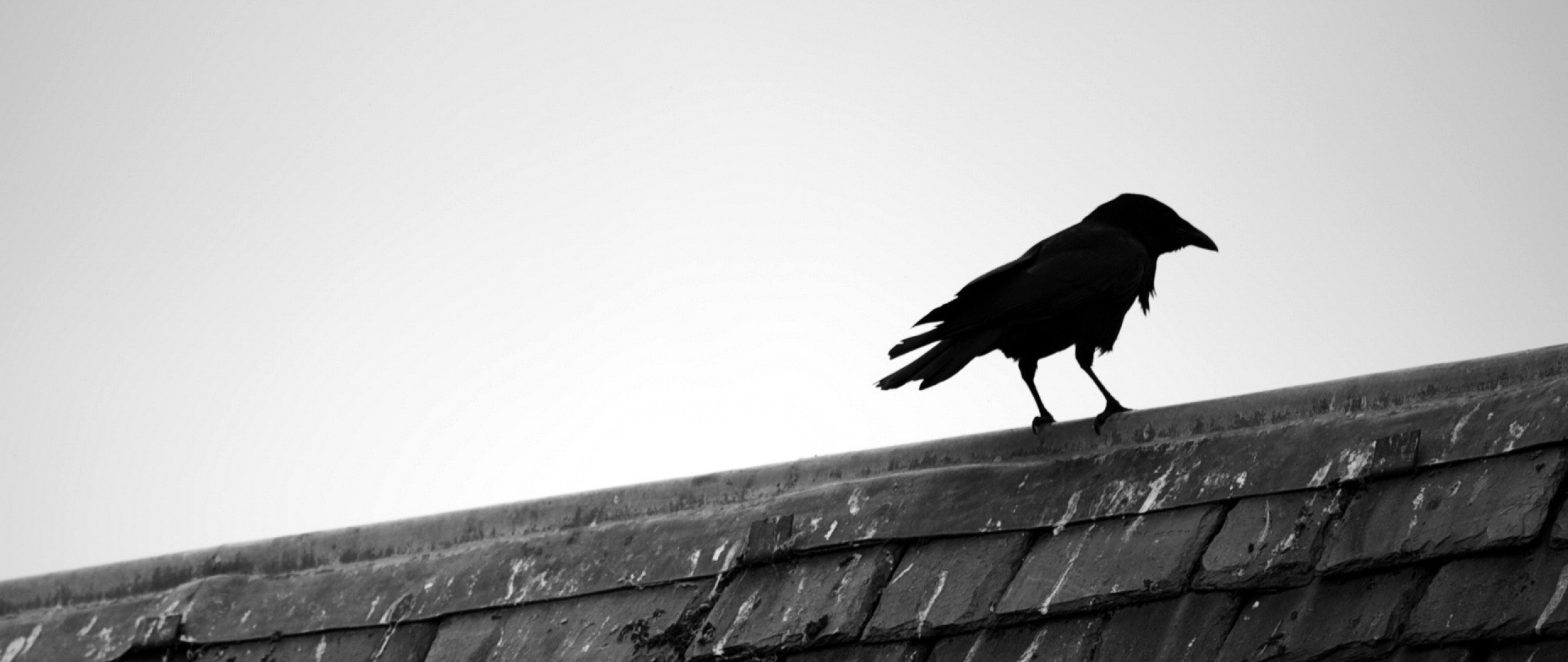 Raven Wallpapers Live Raven Wallpapers HQV53 Raven 2560x1080