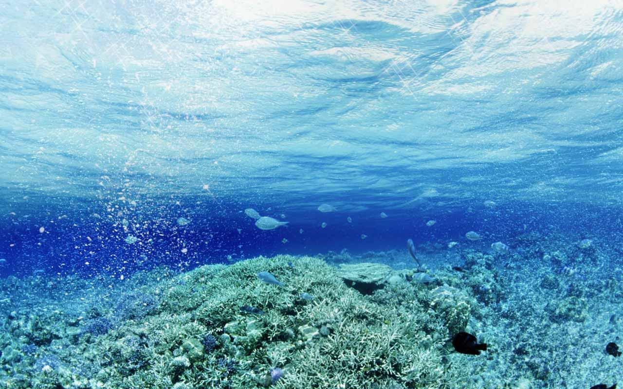 Under the Sea Live Wallpaper - WallpaperSafari