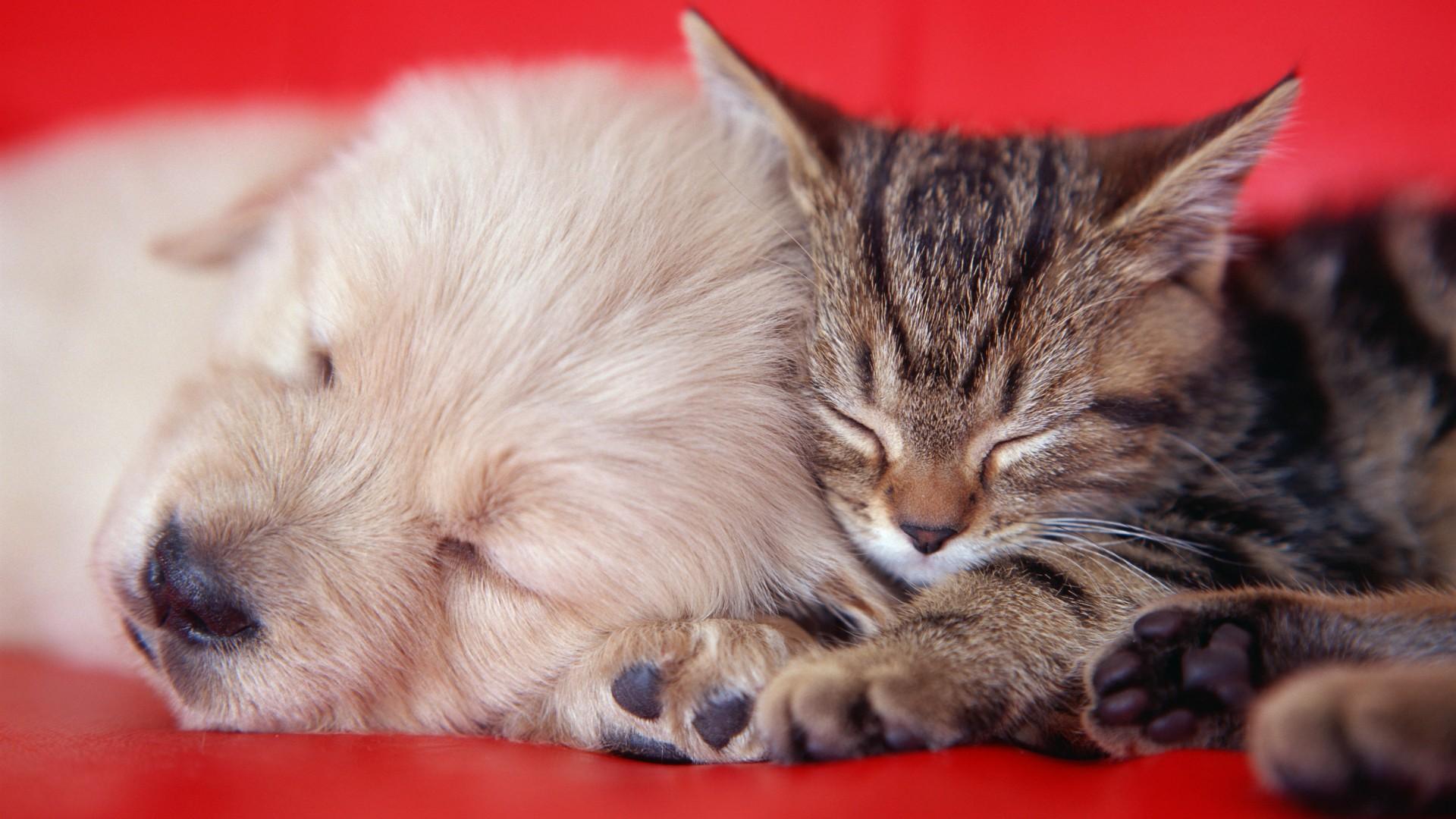 Animals cats kittens dogs puupy cute wallpaper 1920x1080 40503 1920x1080
