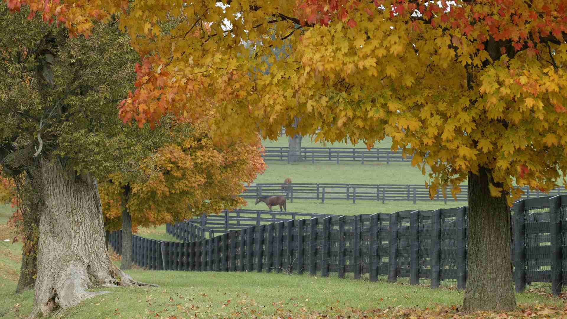 41 Autumn Wallpapers for Computers Tablets or Phones 1920x1080