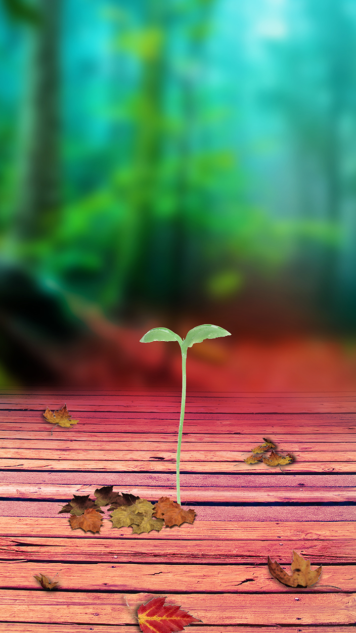 Wallpaper Phone Seeds Sprouting Wallpaper Samsung 720x1280