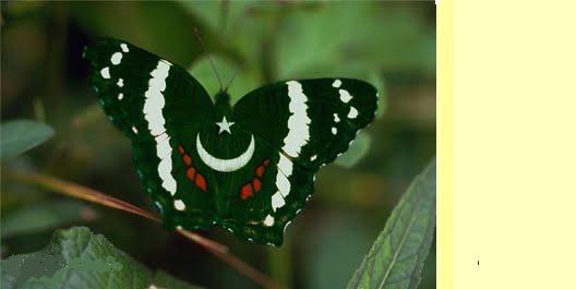 Pakistani Flags Wallpapers   Happy Independence Day   14th August 528x265