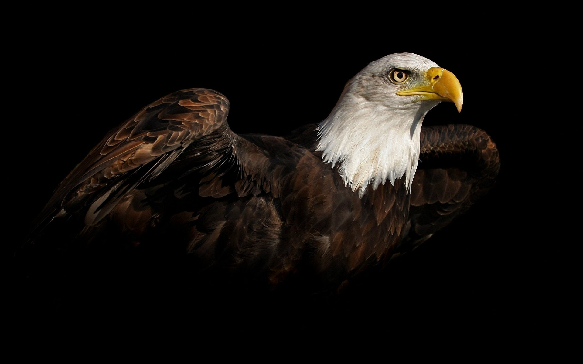 Bald Eagle HD Wallpapers American Eagle HD Pictures HD 1920x1200