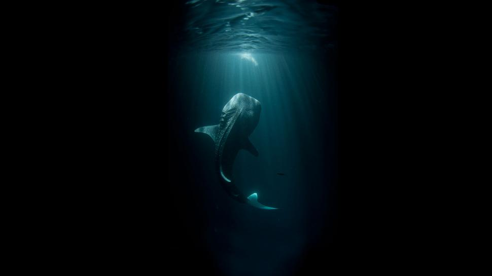 Whale Black Fish Underwater Ocean HD wallpaper creative and 970x545