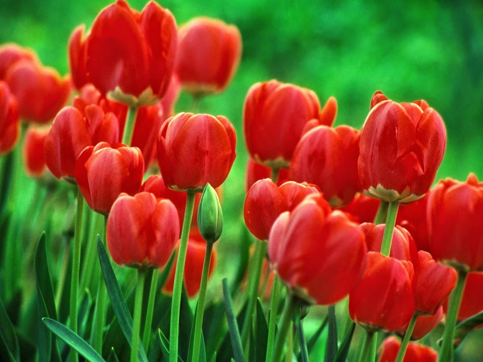 Stunning Flower Wallpapers, Full HD p, Best HD Stunning Flower ...