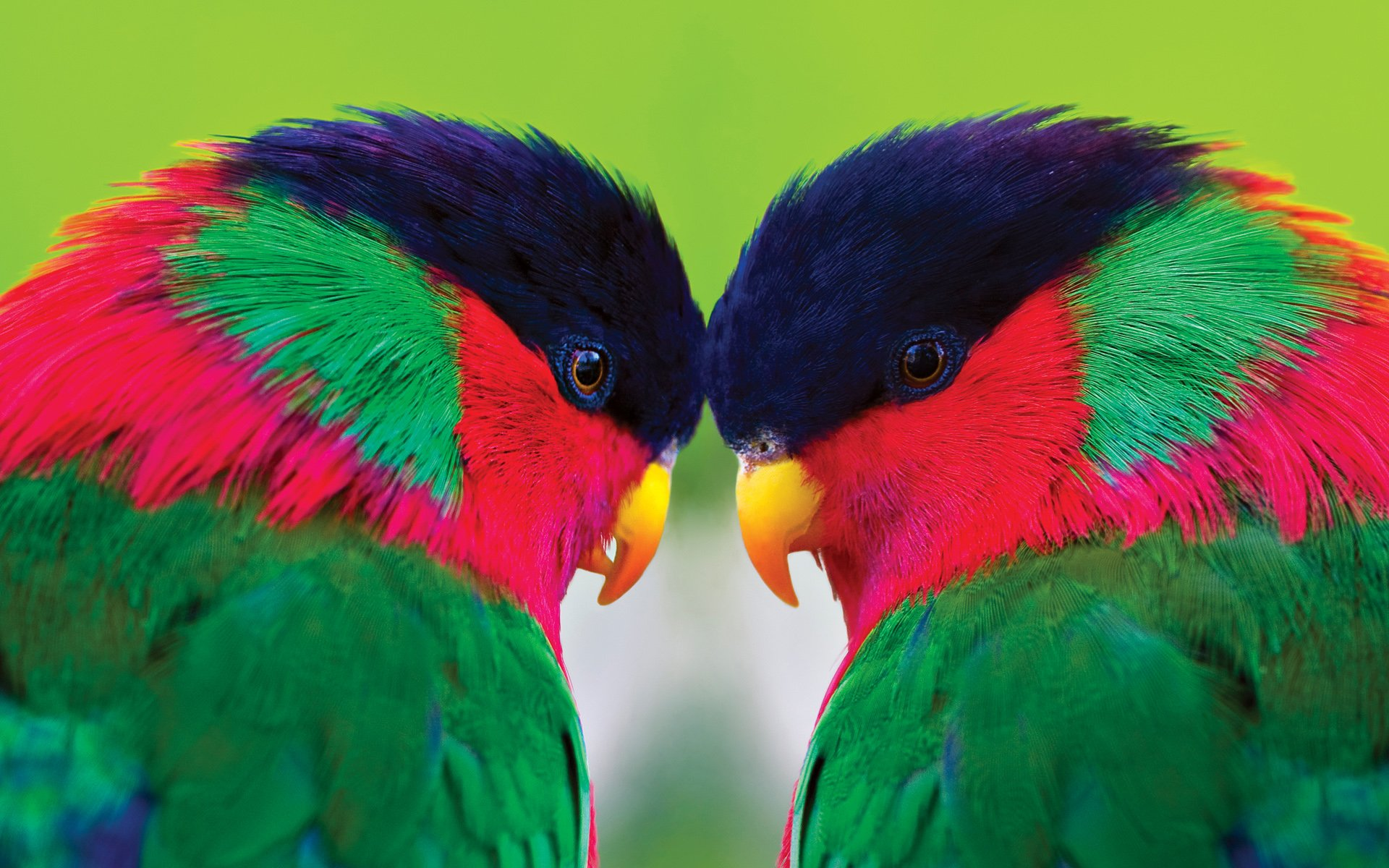 138 Parrot HD Wallpapers Background Images 1920x1200