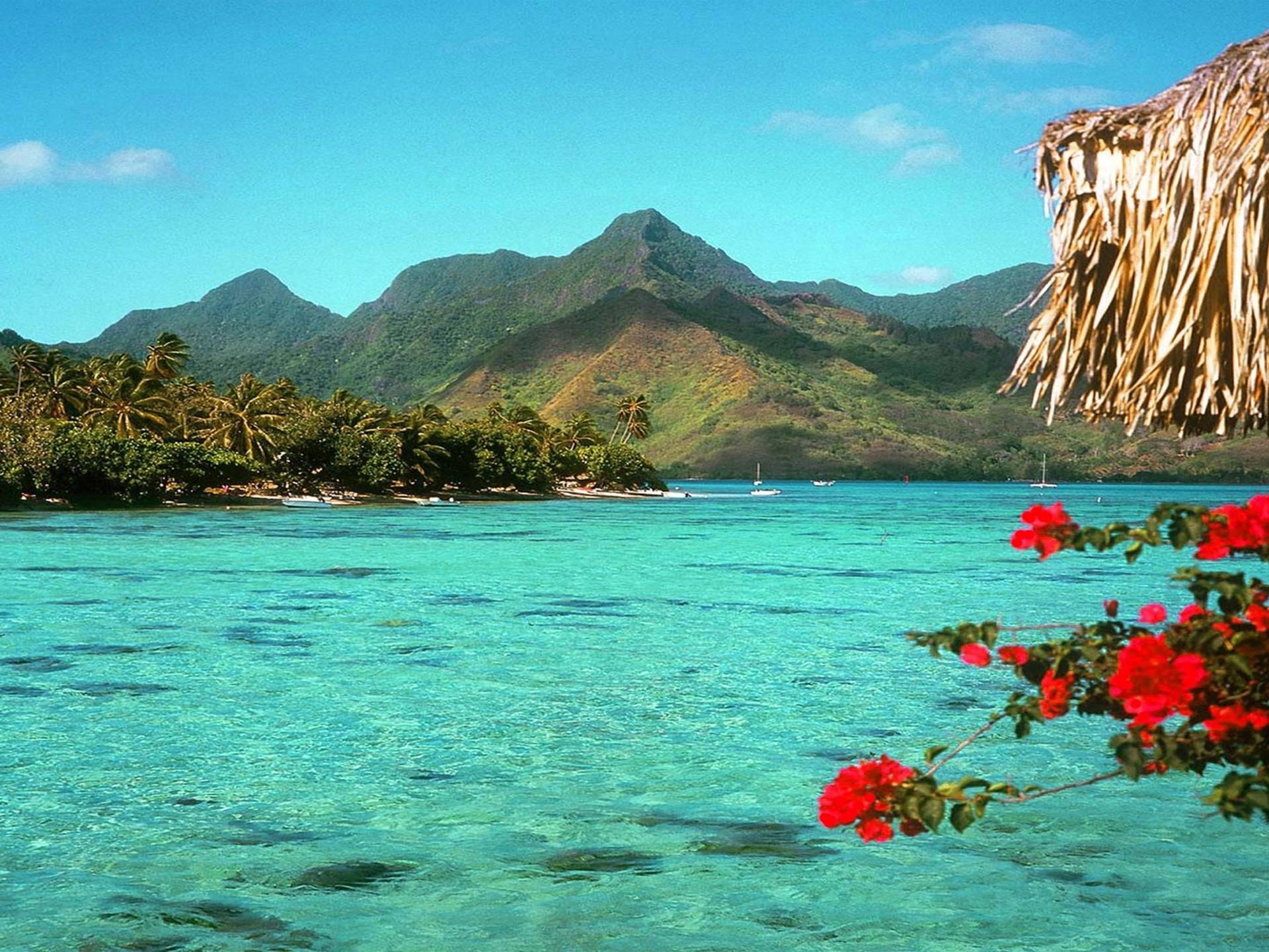 Hd Tropical Island Beach Paradise Wallpapers And Backgrounds: [58+] Tropical Beach Wallpapers On WallpaperSafari