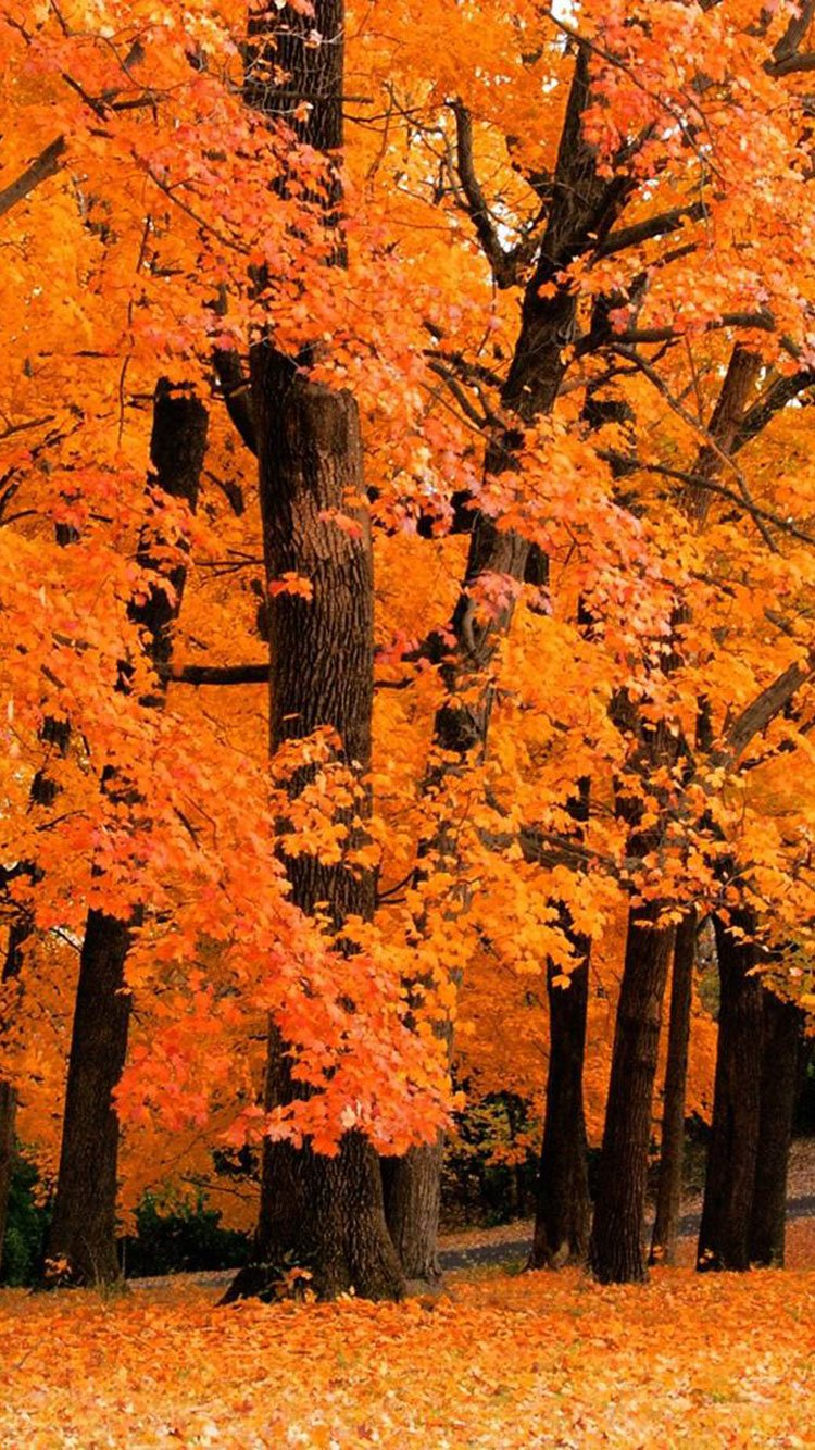 50+ Autumn Phone Wallpaper on WallpaperSafari