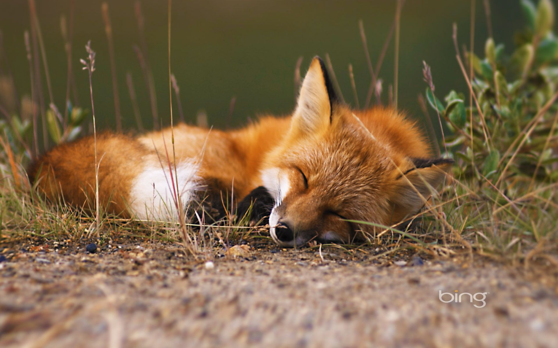 65 Fox Animal Wallpapers   Download at WallpaperBro 1920x1200