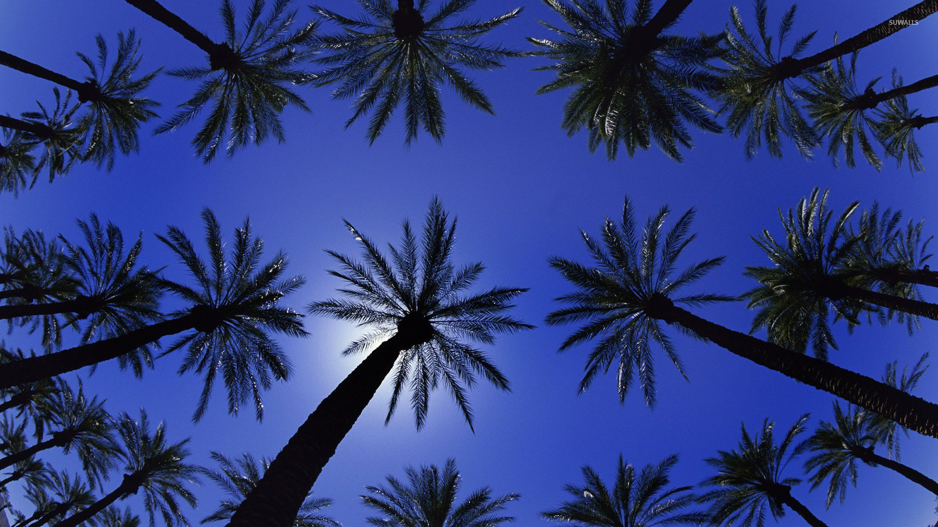 Palm trees wallpaper   Photography wallpapers   20463 1680x1050