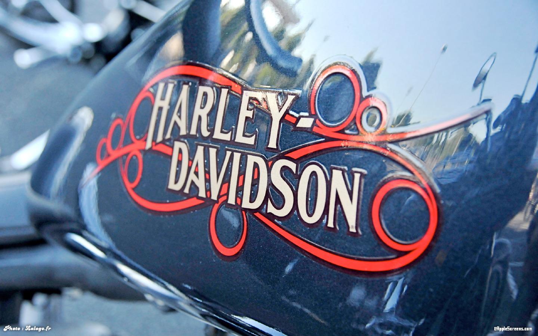 harley davidson logo desktop wallpaper MEMEs 1440x900