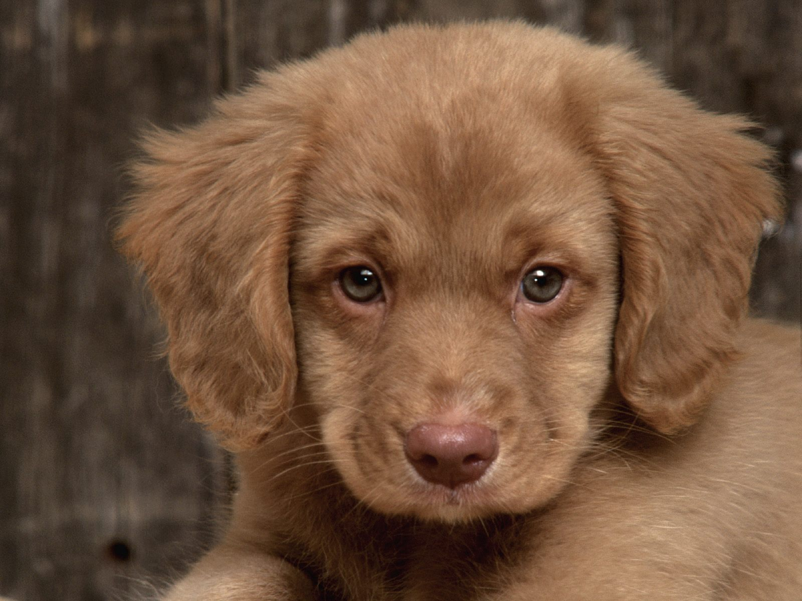 Zoo Park 8 Cute Puppies Wallpapers Cute Puppy Wallpapers for Desktop 1600x1200