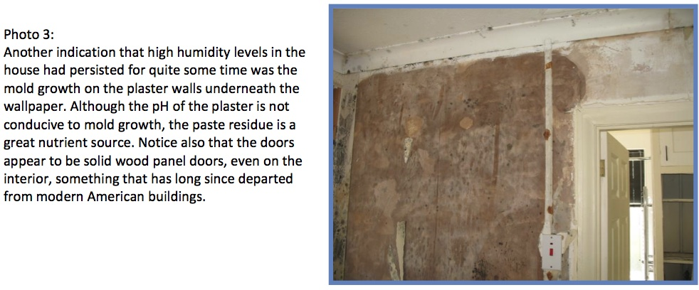 Remediating Mold From Painted Surfaces Surviving Mold 982x408