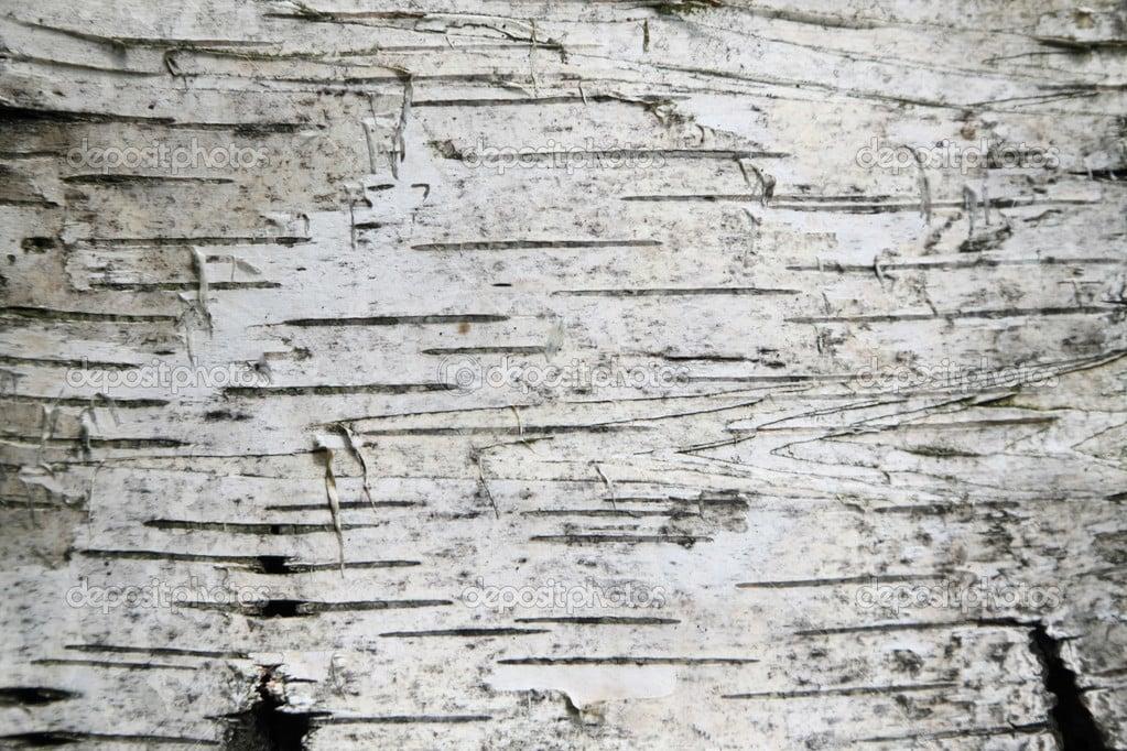 Birch Bark Wallpaper With Texture Wallpapersafari