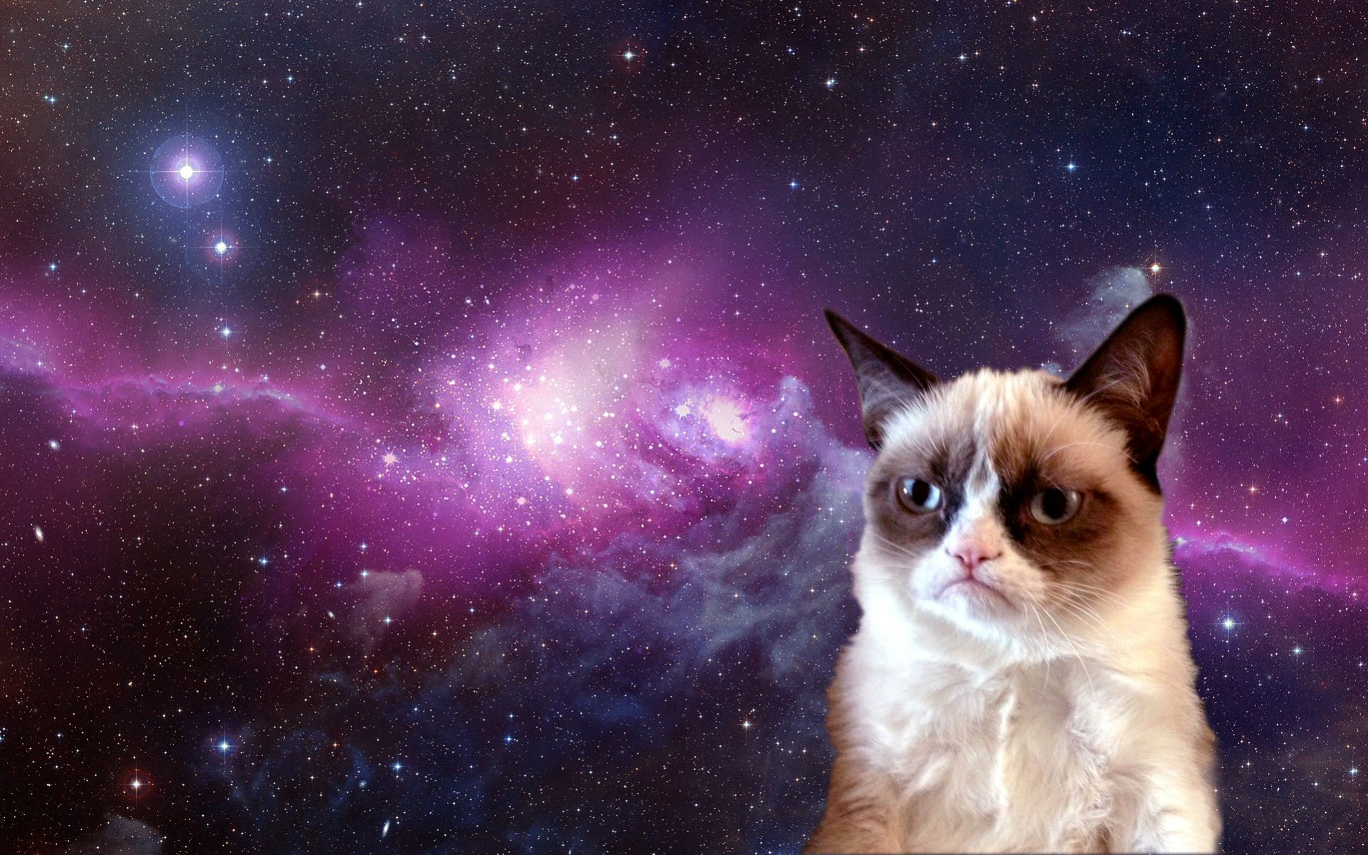 Grumpy Cat Meme HD Desktop Wallpaper HD Desktop Wallpaper 1919x1199
