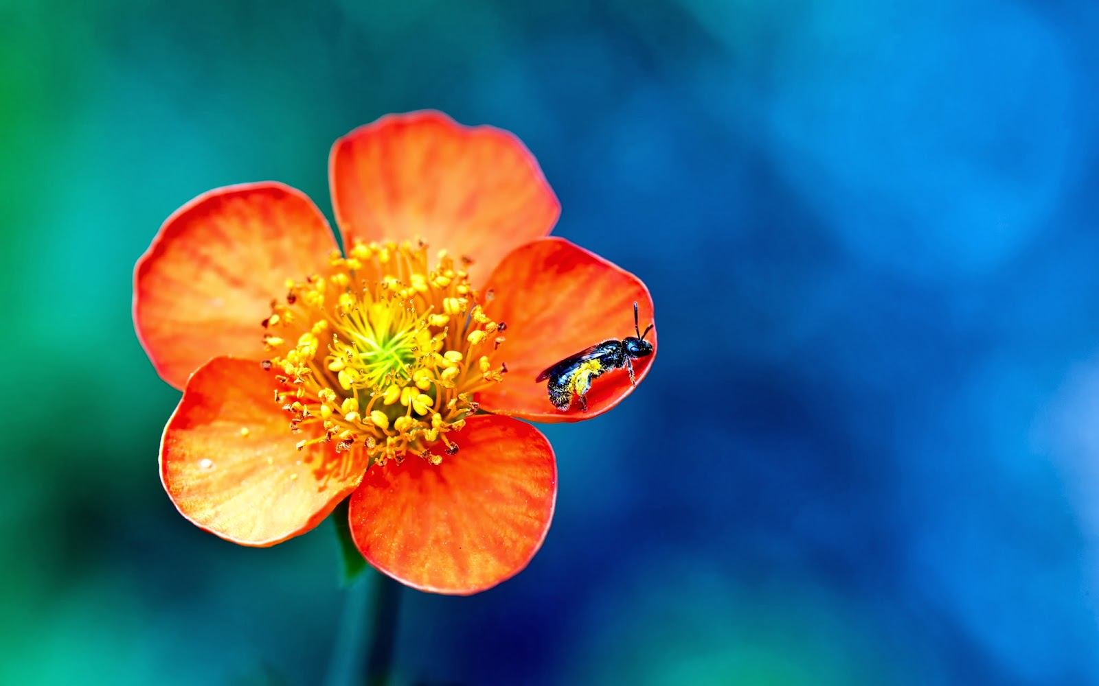 Title HD wallpapers 1080p widescreen Flowers 1600x1000