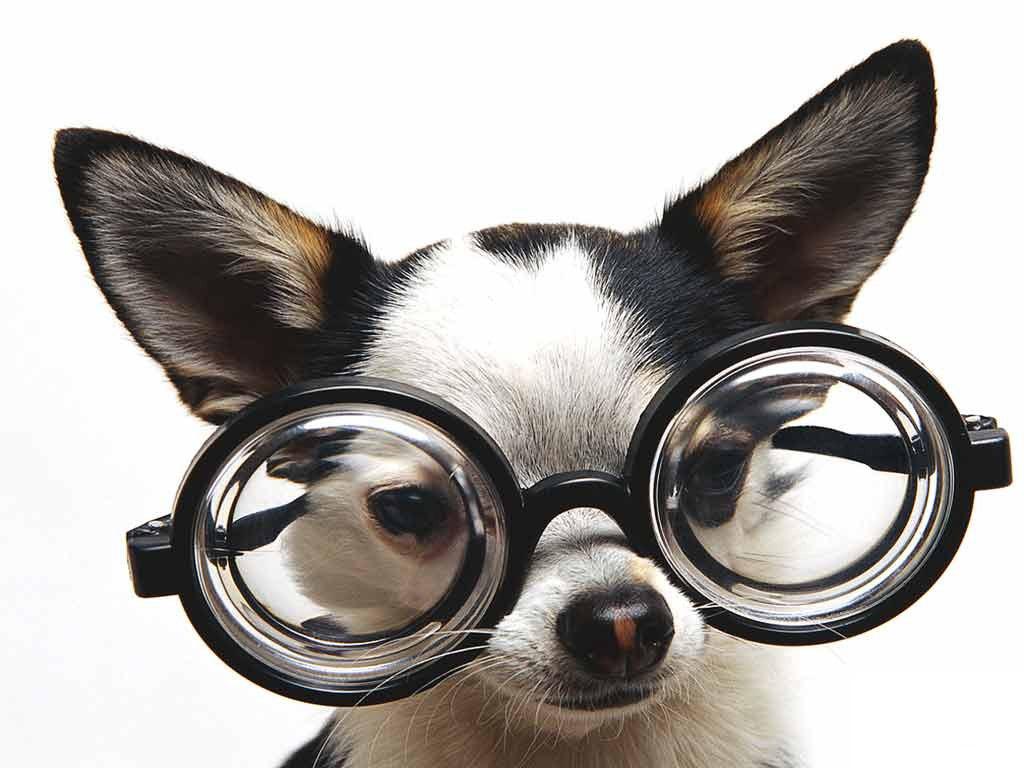 48] Cute Puppy Wallpaper Funny on WallpaperSafari 1024x768