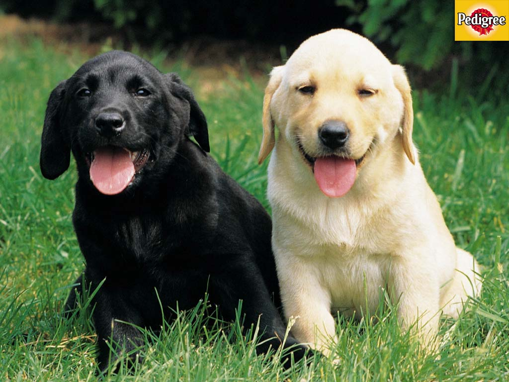More Dog and Puppy wallpapers from Pedigree 1024x768