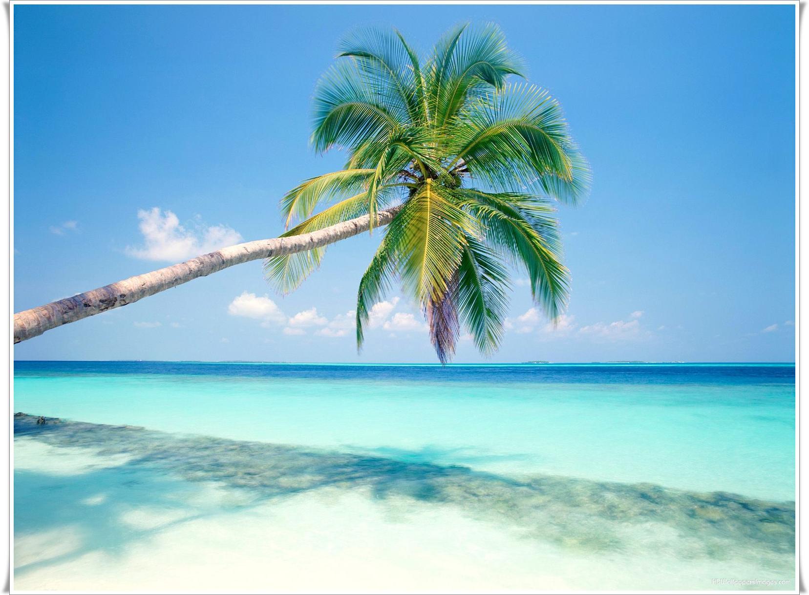 High Quality Goa Beach Wallpaper Full HD Pictures 1656x1218