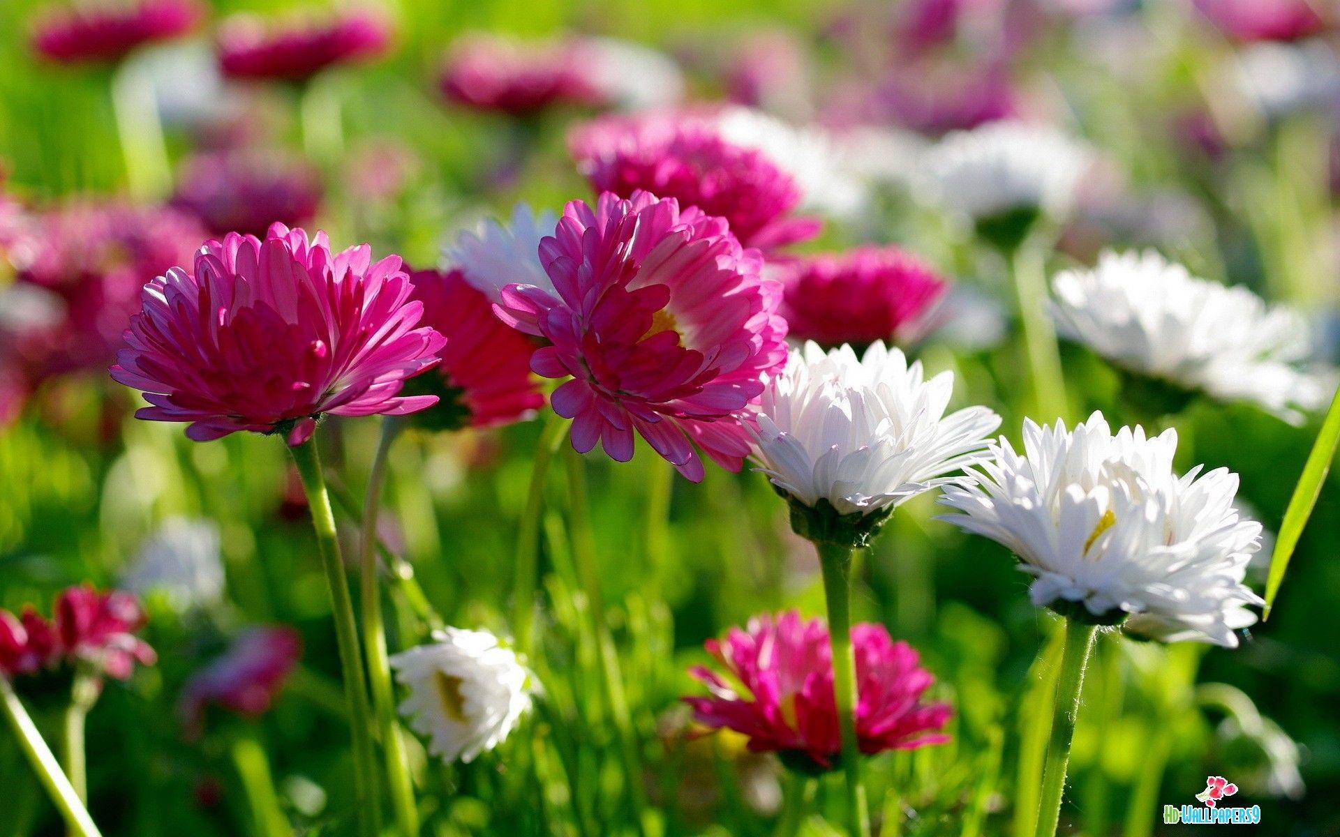 48 desktop wallpaper flowers high resolution on