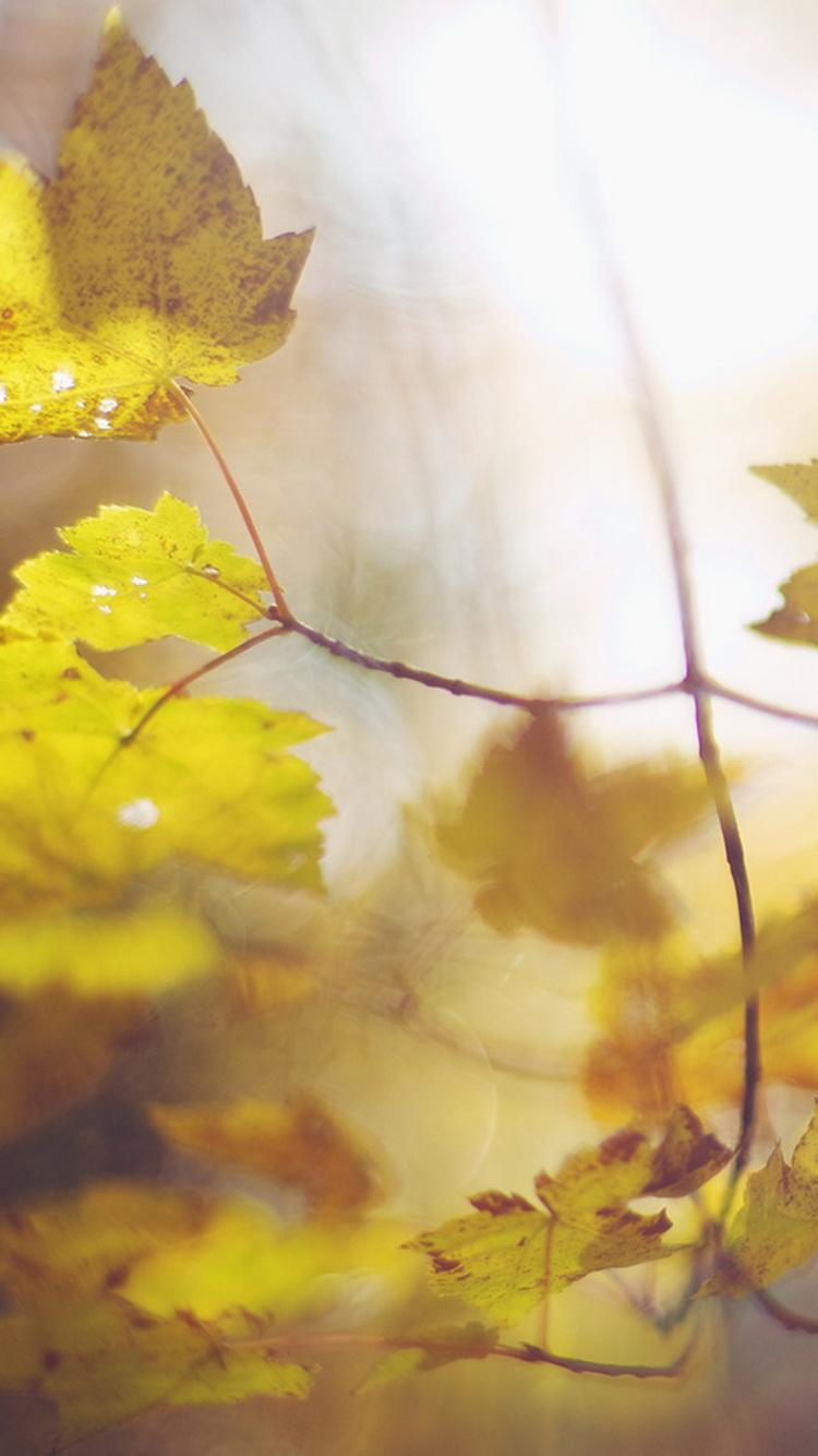 Burry Fall Leaf iPhone 6 Wallpaper 750x1334