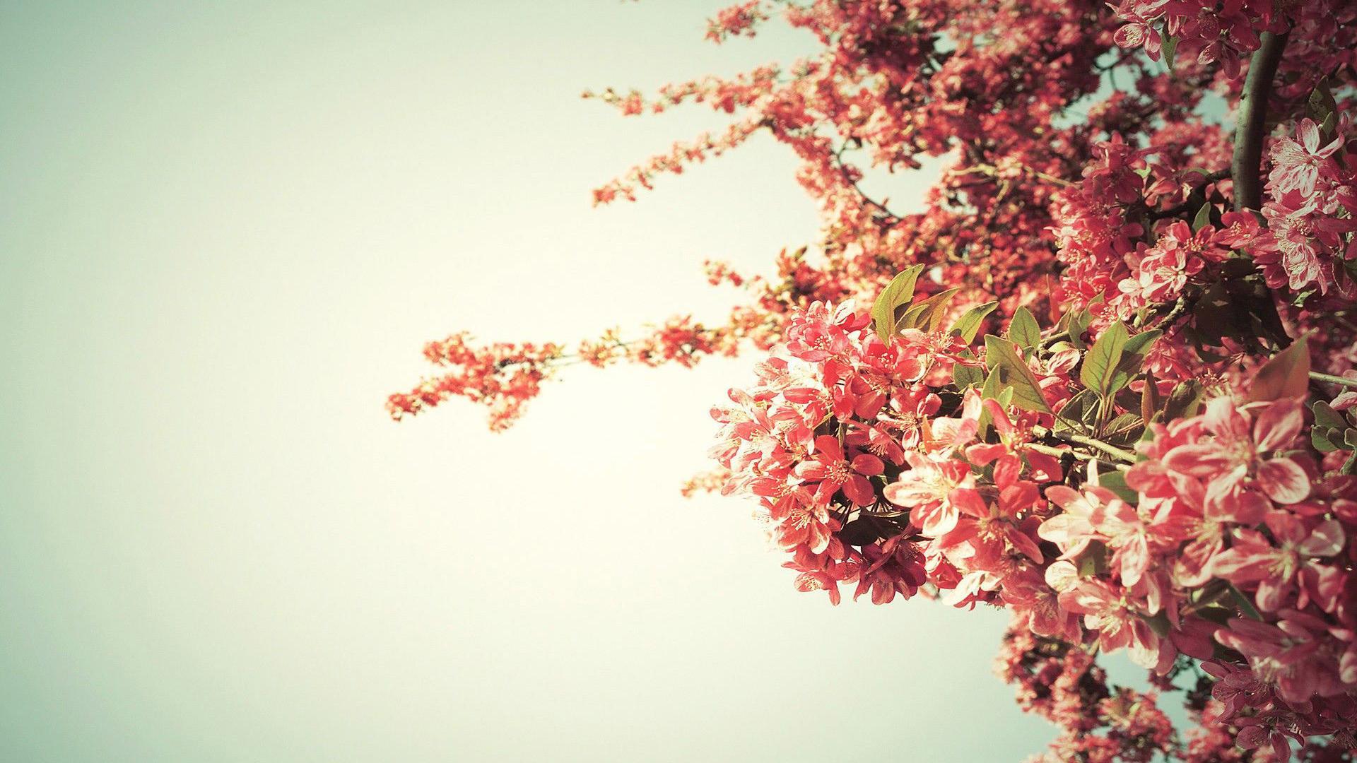 Spring Wallpaper Widescreen   Spring Wallpaper Hd 472273   HD 1920x1080