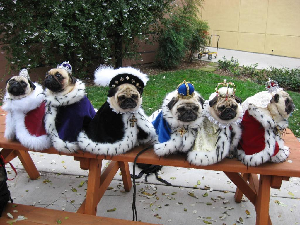Dogs in Clothes Funny Wallpaper 1024x768