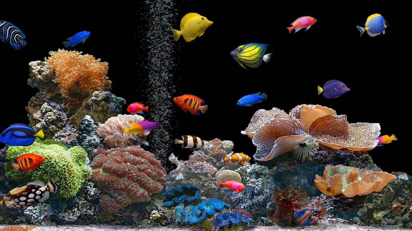 1366x768 Wallpaper fish underwater colorful coral 1366x768