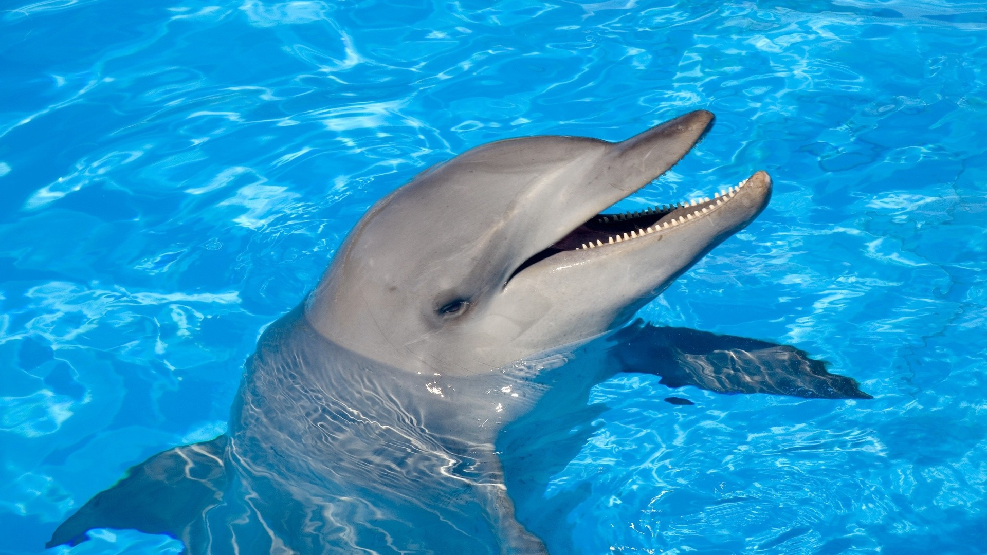 Dolphin Wallpaper Hd 1080p Wallpapersafari