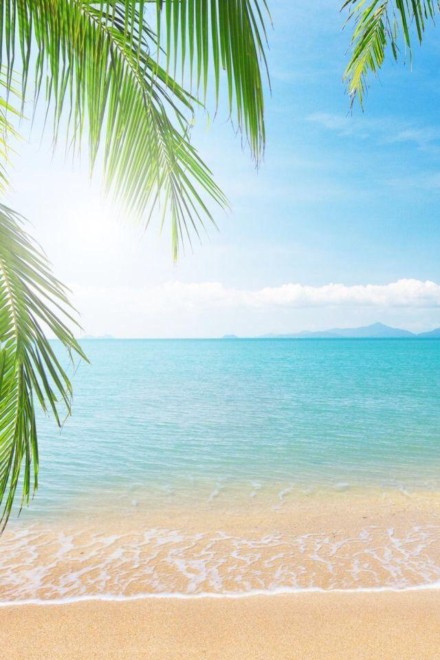 Clear beach wallpaper Serenity Beach I love the beach Ocean 640x959