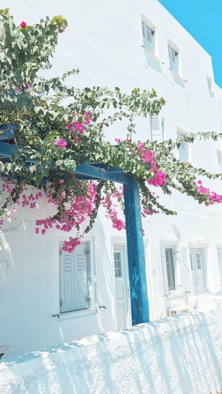Pink flower on Streets of Santorini iPhone wallpaper 760x1350