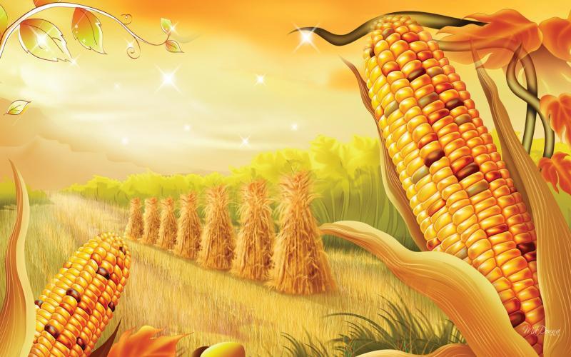 Free Harvest Desktop Wallpaper Wallpapersafari