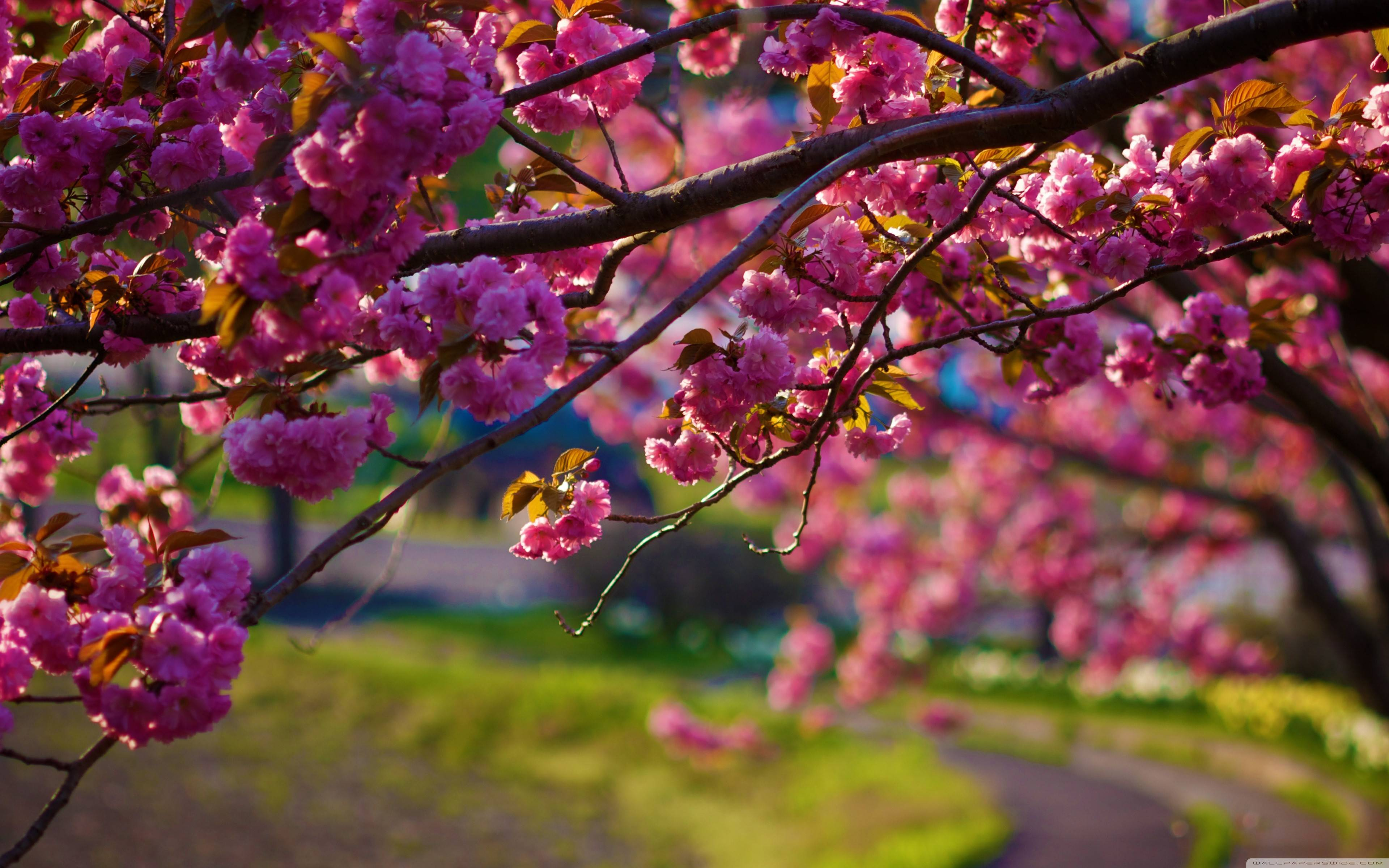 HD Spring Wallpapers For Desktop 3840x2400