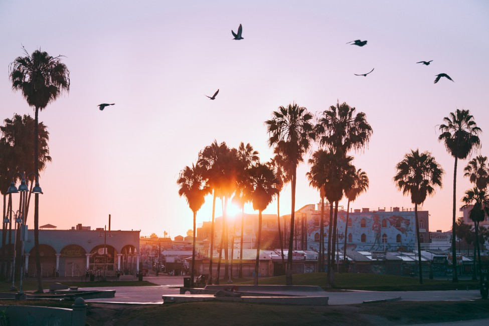 Palm Trees Dawn Birds Venice Beach Los Angeles United States 975x650