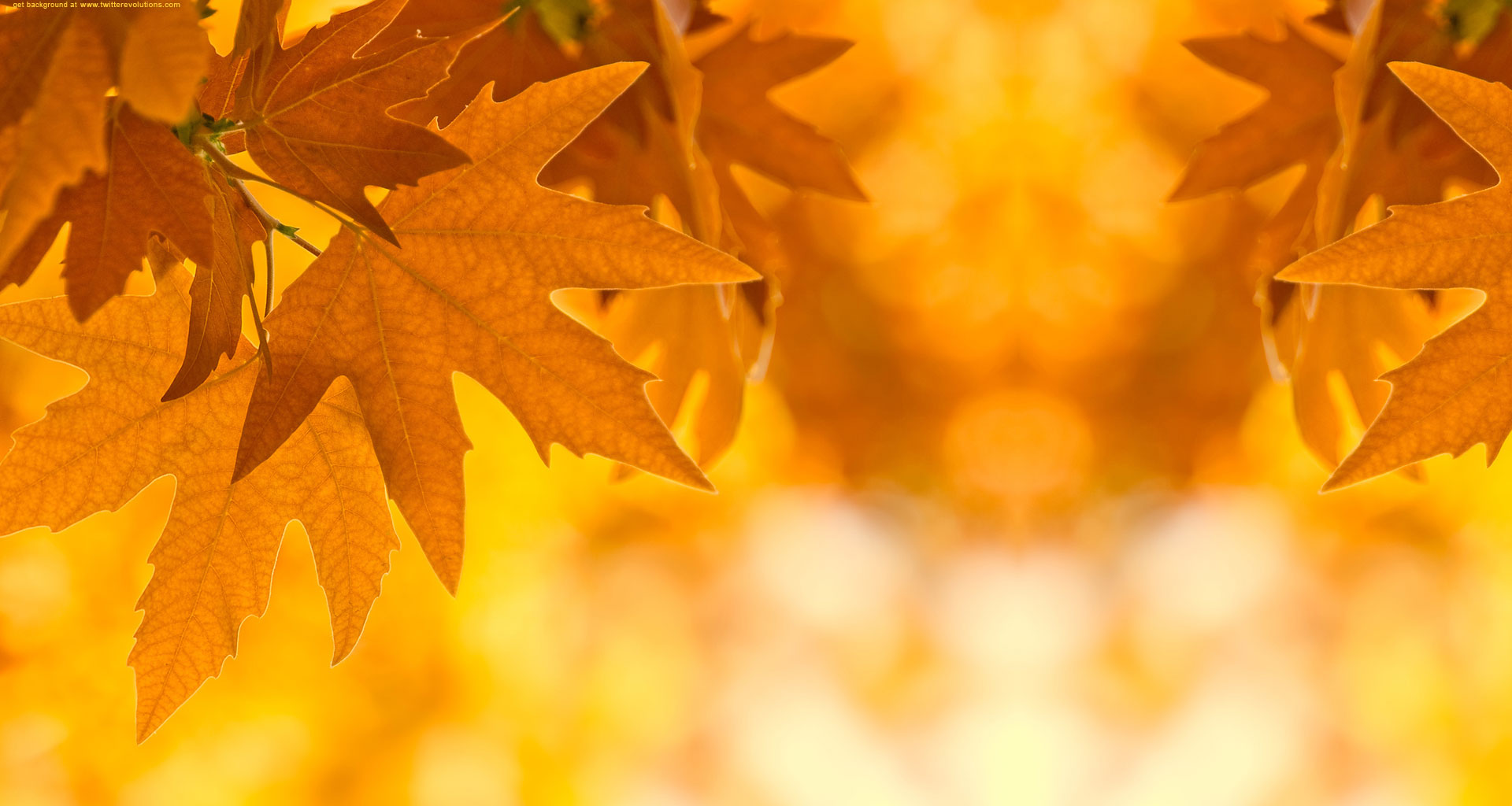 Autumn Leaves Falling   wallpaper 1920x1024