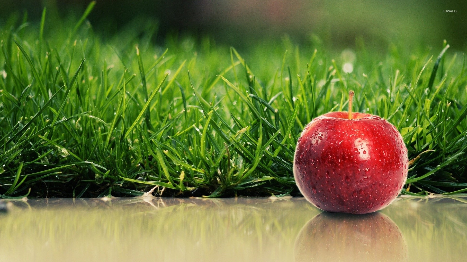 Red apple with water drops by the green grass wallpaper 1920x1080