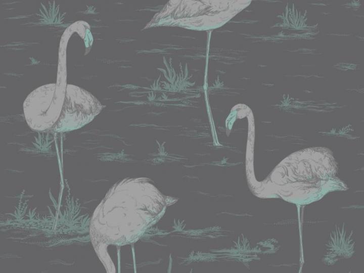 Cole And Son Flamingo Wallpaper
