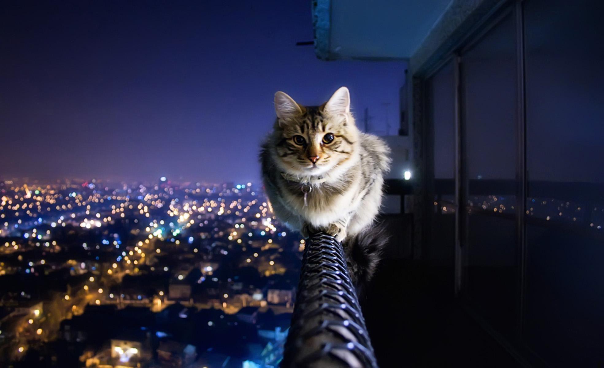 Hd wallpaper night - House Of Night Cats Wallpapers House Of Night Cats Backgrounds House