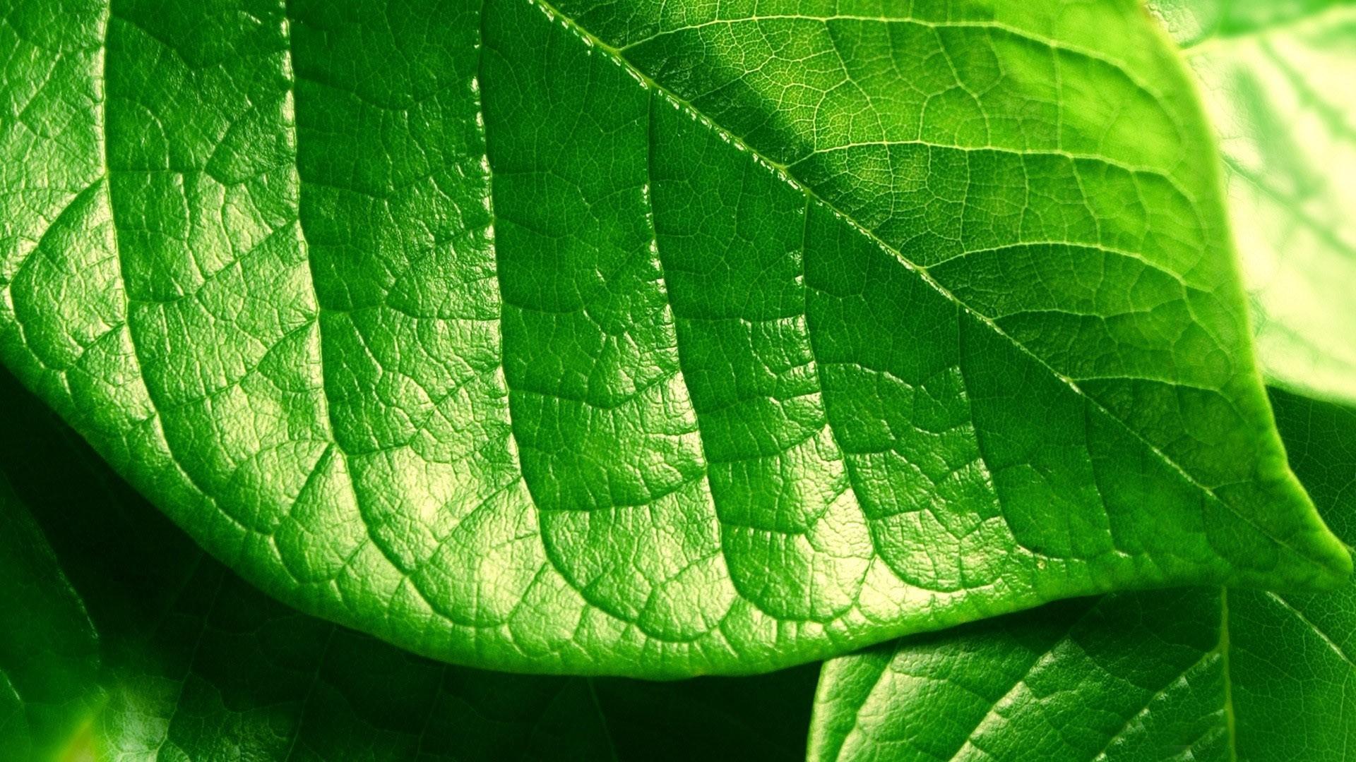 Green leaf wallpaper 11681 1920x1080
