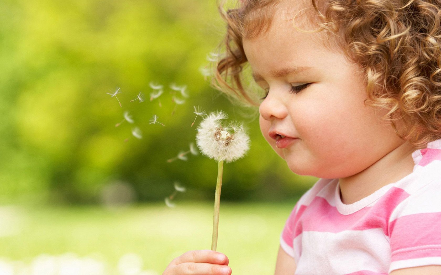 Blowing Dandelion Wallpaper Cute child blowing dandelion 1680x1050